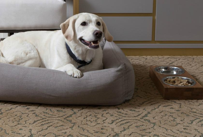 Xv beacon boston from 10 pampering pet friendly hotels for Pet friendly hotels in ny