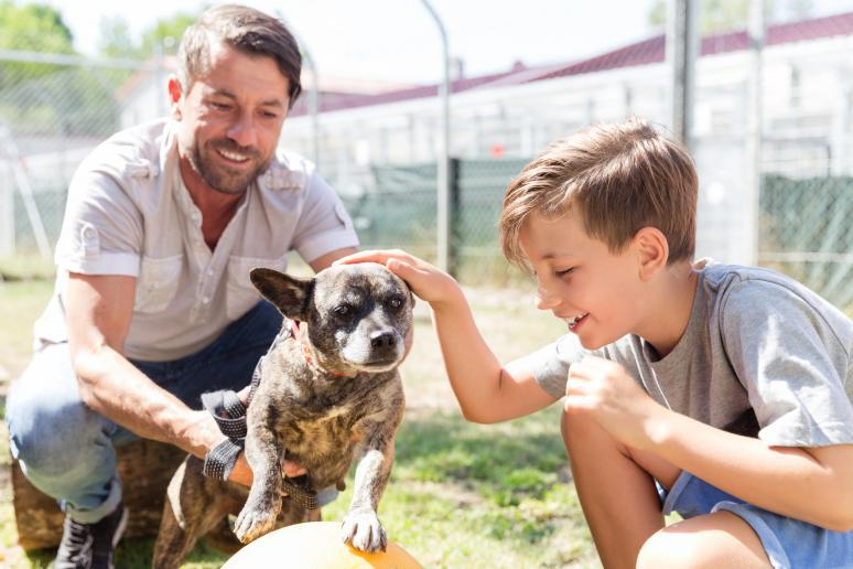 25 Reasons to Adopt a Mutt