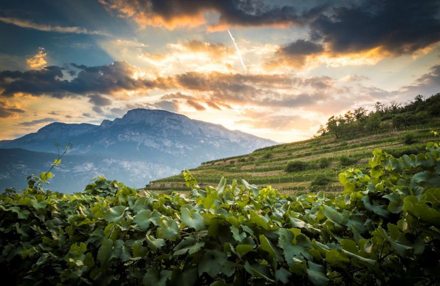 Sparkling Sustainability: Discovering Ferrari Wine in