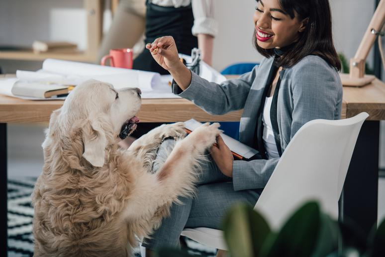 Don't: Assume your coworkers know how to treat your dog