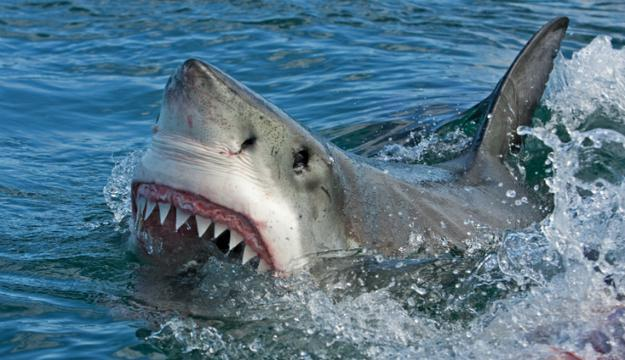 The Places You'd Most Likely Be Attacked by a Shark