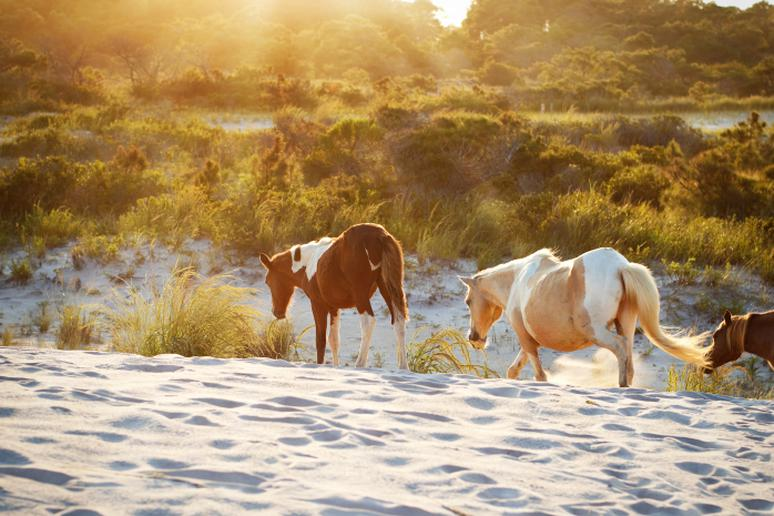 Maryland - Assateague Island
