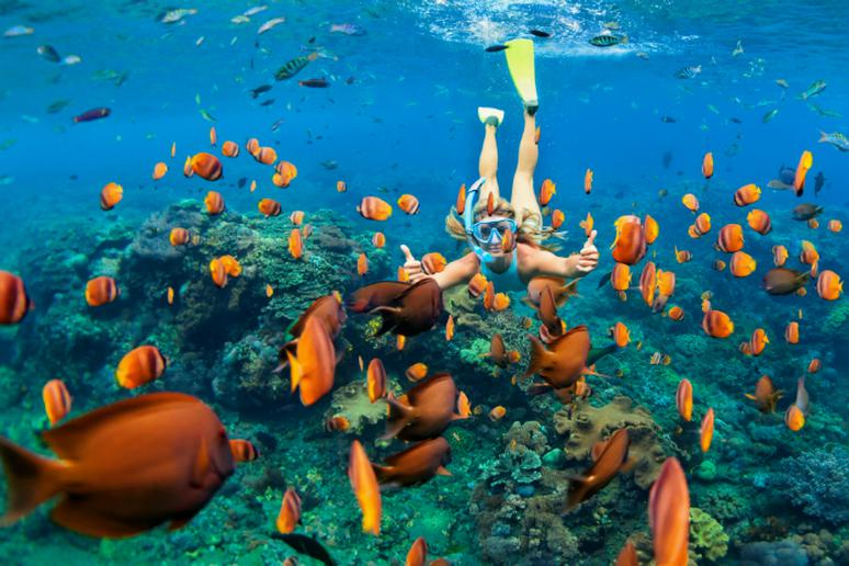Best Great Barrier Reef Island For Snorkeling