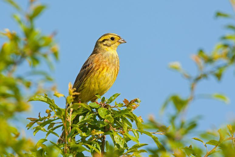 Alabama: The Yellowhammer State