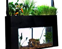 At-Home Aquarium Helps You Grow Vegetables and Herbs