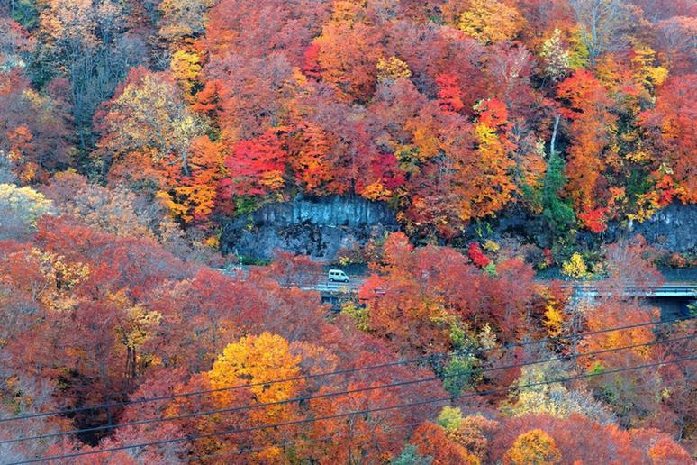 Road Trip to See Fall Foliage
