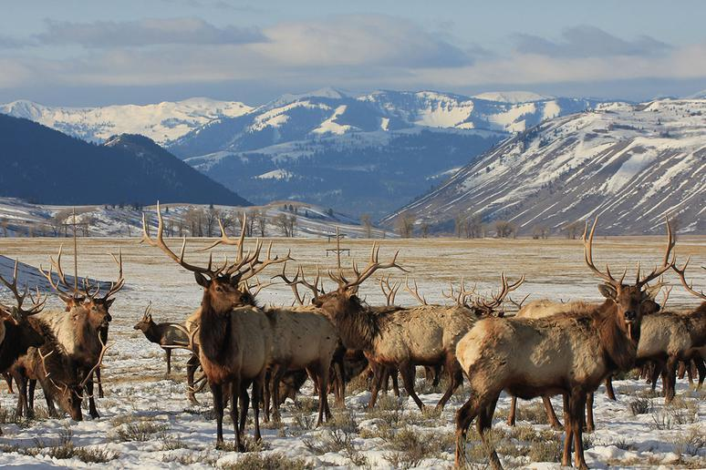 Wyoming: National Elk Refuge (Jackson)