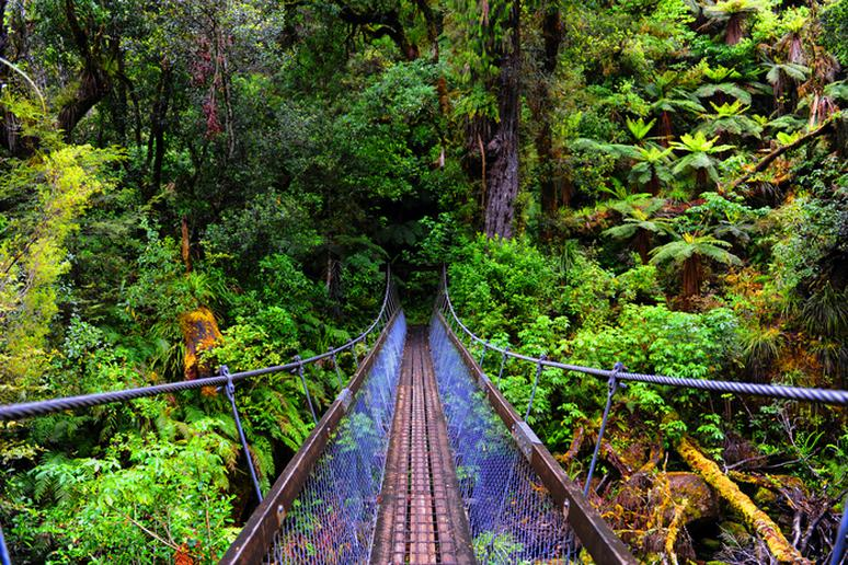 Explore the Great Walks of New Zealand