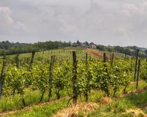 Beginner's Guide to Nebbiolo