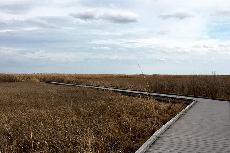 Delaware - Boardwalk Trail, Bombay Hook National Wildlife Refuge