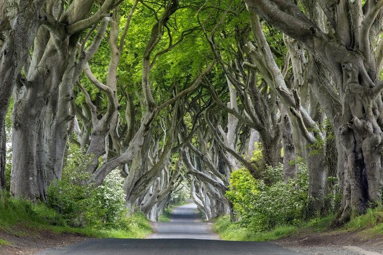 Drive through the Dark Hedges in Northern Ireland