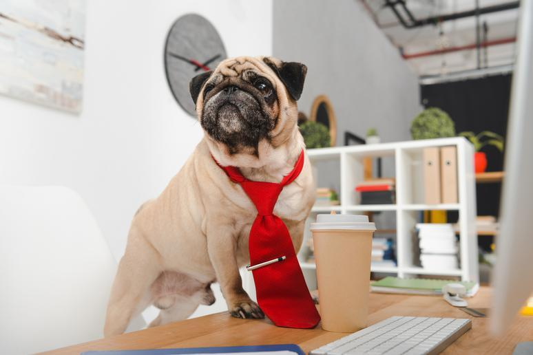 Office pet etiquette: Do's and don'ts when taking your dog to work