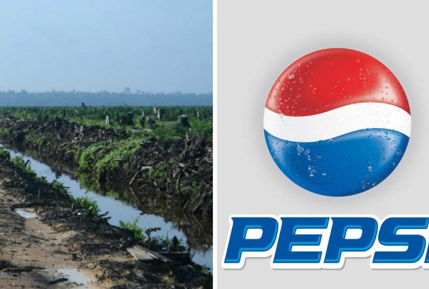 Pepsi is one of the few major companies whose policies on palm oil remain unclear or unchanged.
