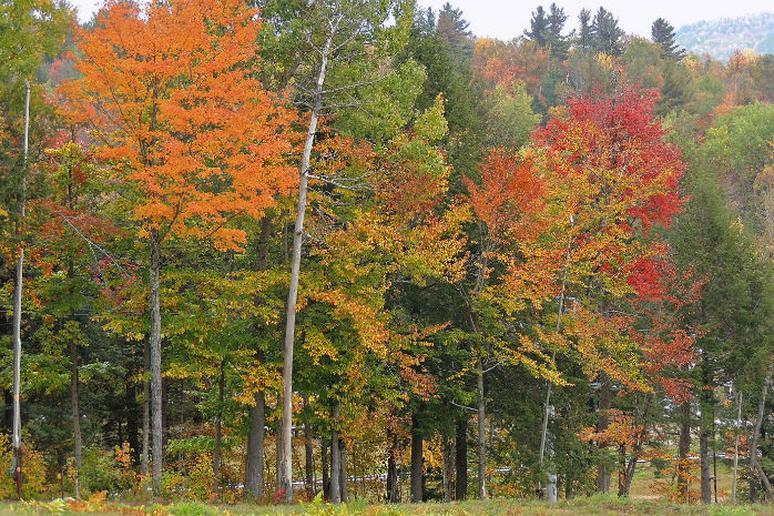 Maine – Bethel and White Mountain National Forest