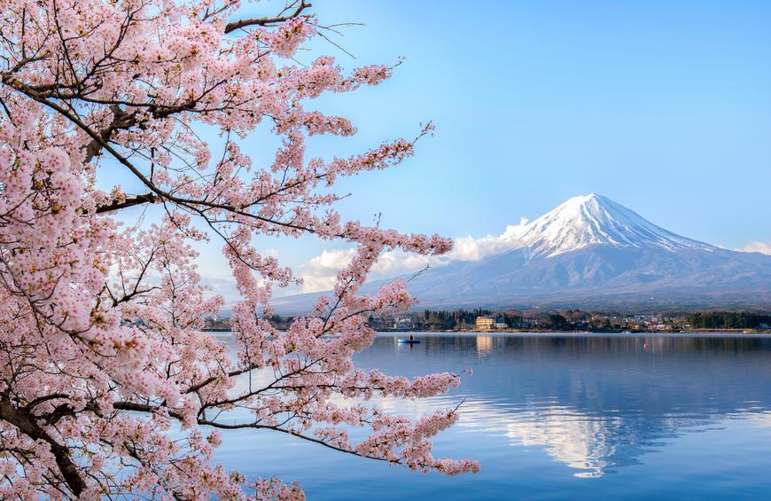 Where To See Beautiful Cherry Blossoms Around The World The Active Times