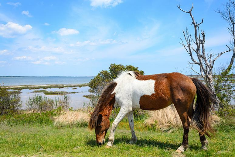 Maryland – Assateague Island