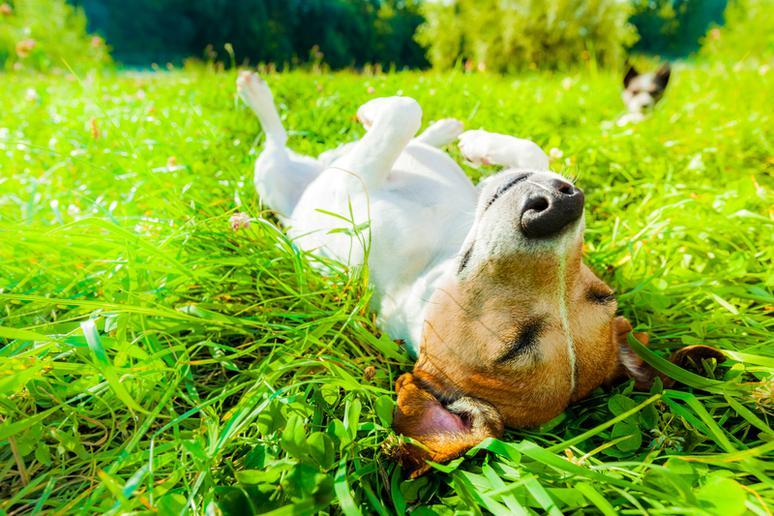 The best dog parks in the U.S.