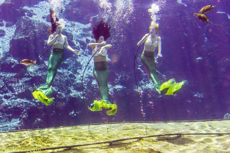 Mermaids of Weeki Wachee (Weeki Wachee, Florida)