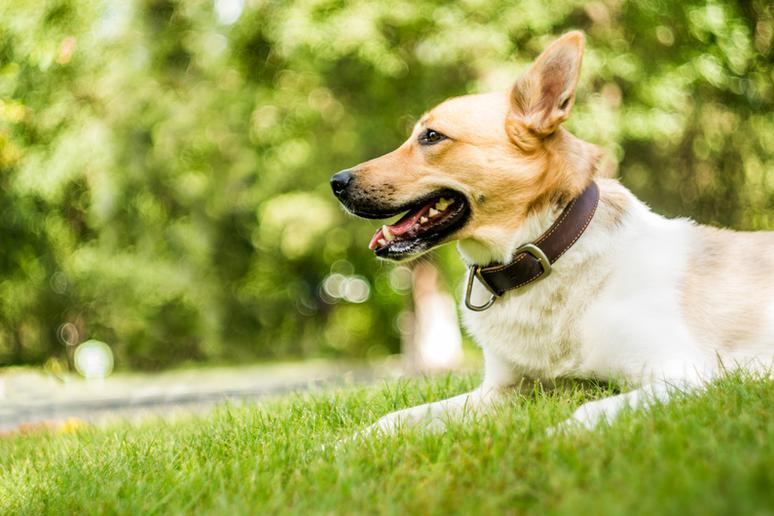 The 50 Best Dog Parks in the U.S.