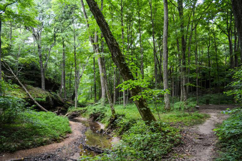 Illinois – Zip line through the Shawnee National Forest