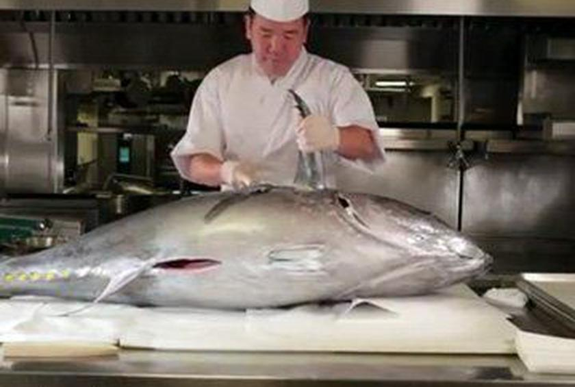 How to Butcher a Bluefin Tuna