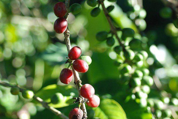 A Guide to the World's Coffee Regions (Slideshow)