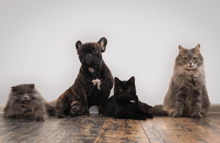 9 Countries That Eat Cats and Dogs