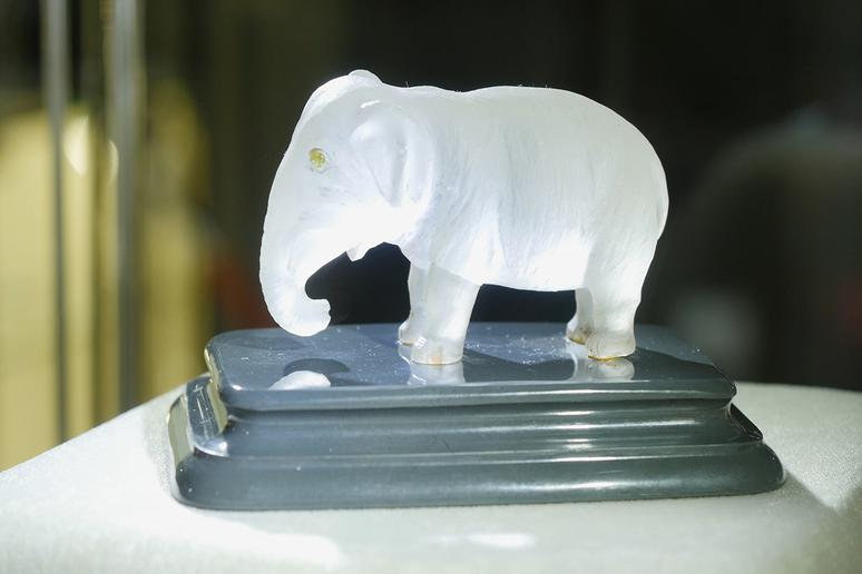 Keep an elephant in your house if you live in Brazil