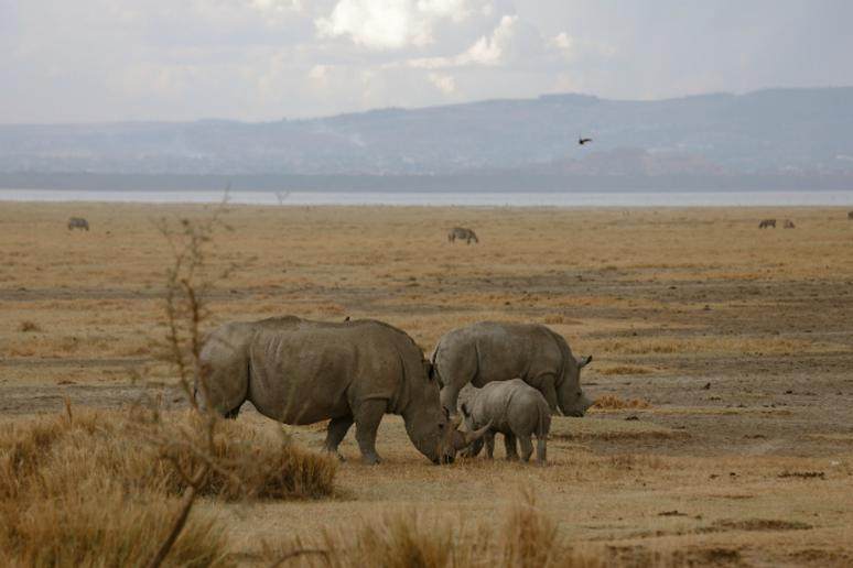 Rhinos and Baby