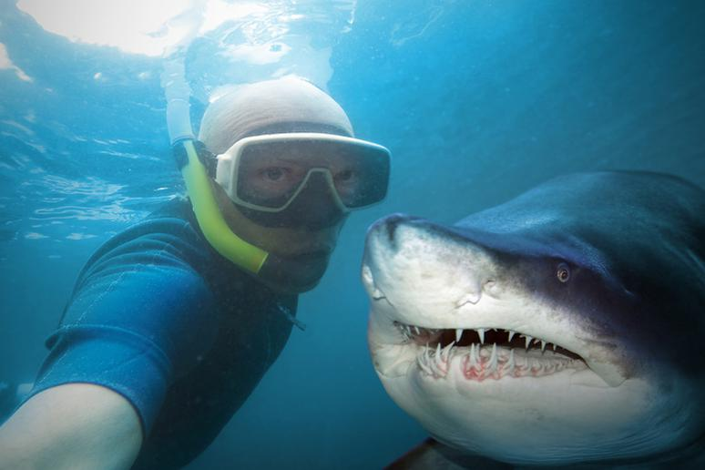 With Sharks in Hawaii