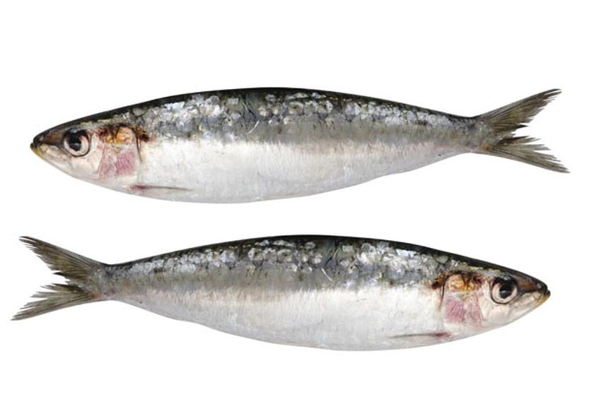 What Fish Should You Be Eating Now Slideshow