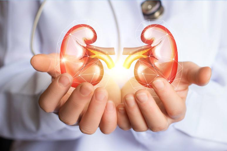 Kidneys stay healthy