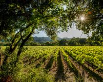Gabe Sasso Napa Valley's Stags Leap District: Cabernet Sauvignon and More