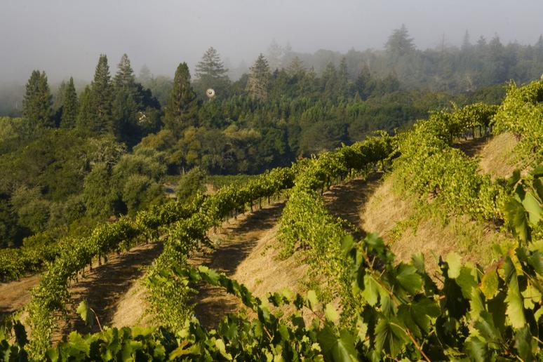 69. Pedroncelli Winery, Geyserville, Calif.