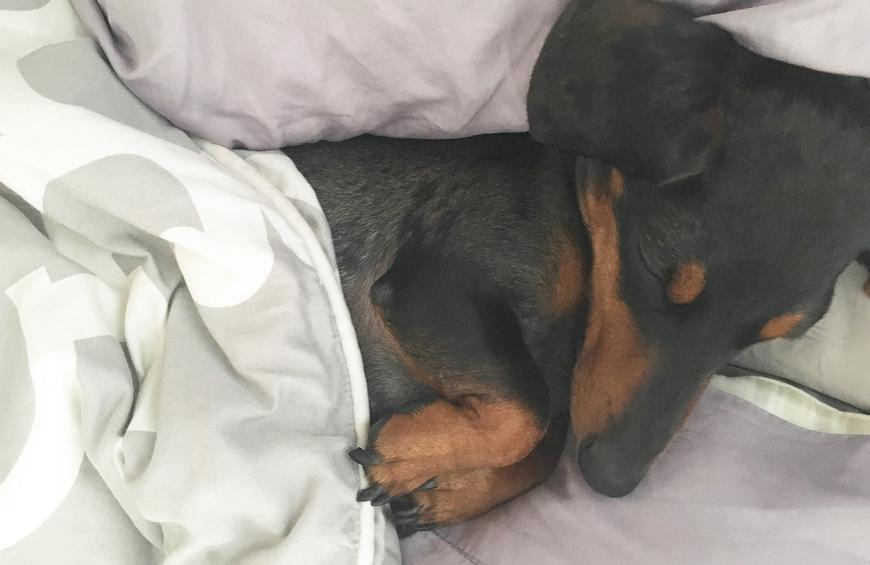 Should Your Dog Sleep With You at Night?