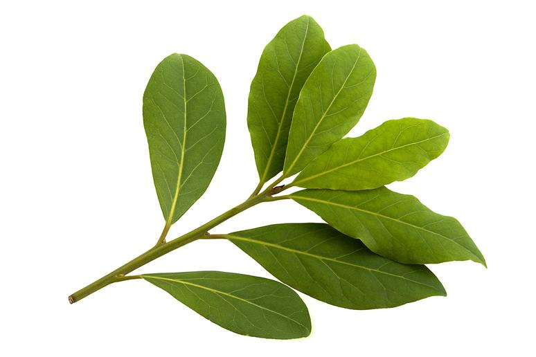 In England pin bay leaves to your pillow