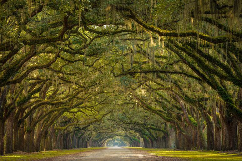Wormsloe Plantation, Georgia