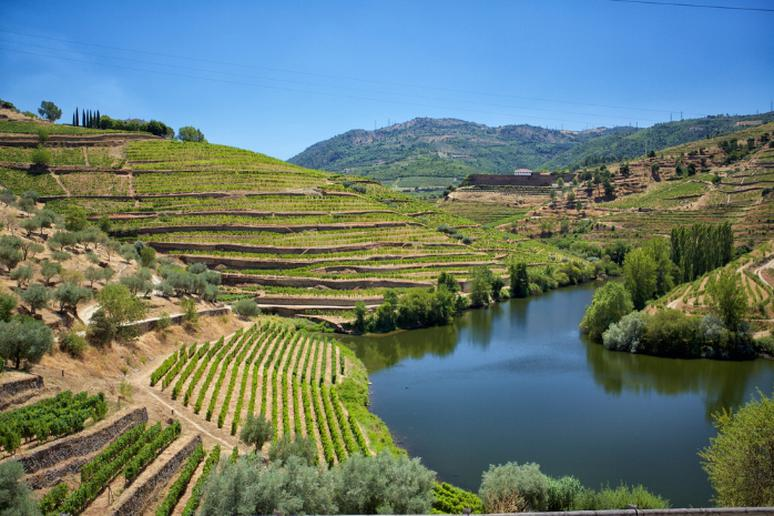 Have wine in Douro Valley, Portugal