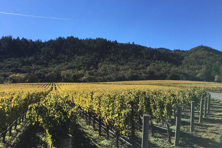 88. Staglin Family Vineyard, Rutherford, Calif.