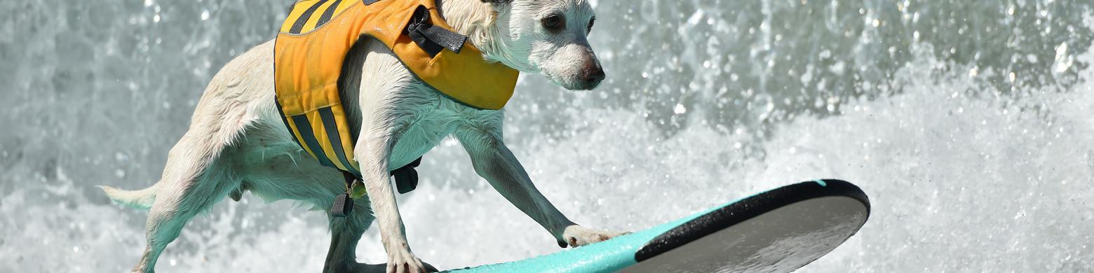 The Absolute Best Surfing Dogs