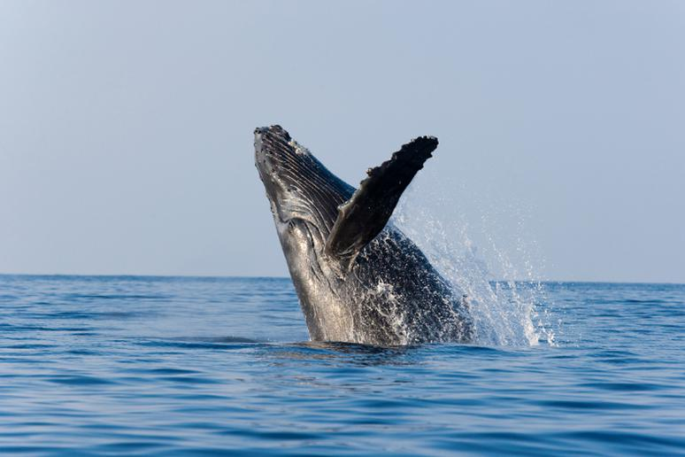 Go whale watching in Hawaii