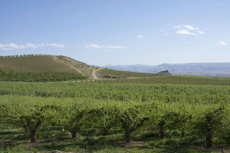 Serious (and Sometimes Successful) Wines from Idaho