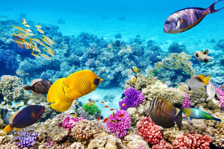 10. The Great Barrier Reef, Australia