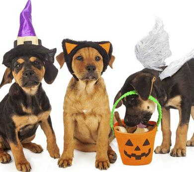 Trick-Or-Treating Pups