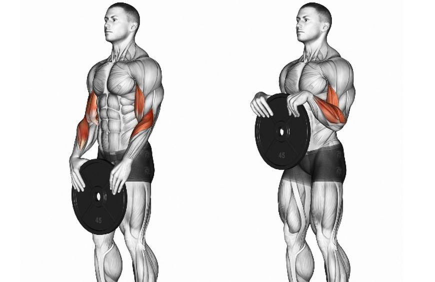 Standing or seated dumbbell curls from Best Exercises for ...