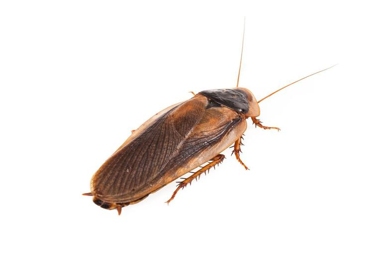 """""""Is that a roach or a palmetto?"""""""