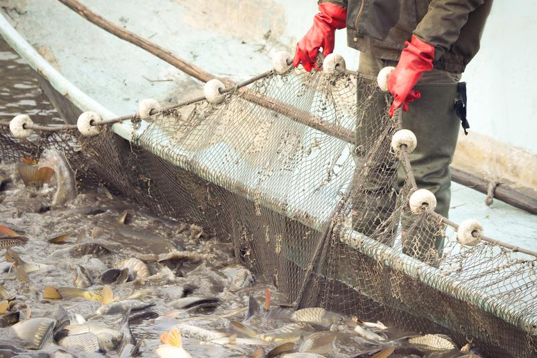 Even the 'Organic' Fish May Not Be What You Think