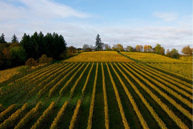 70. The Eyrie Vineyards, McMinnville, Ore.