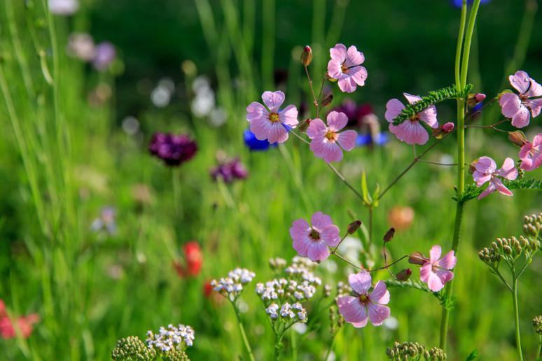 Pick wildflowers and medicinal plants