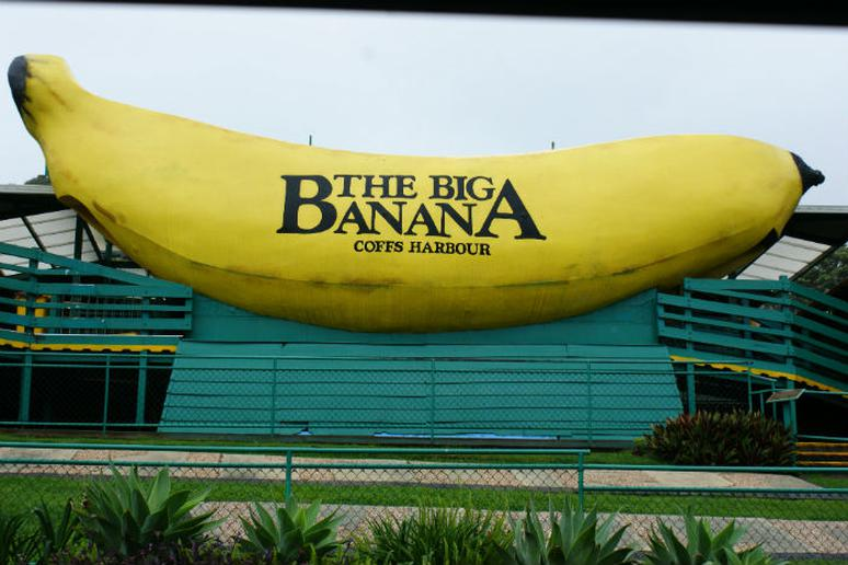 Banana - Coffs Harbour, New South Wales, Australia
